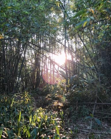 虎山_190624_0042